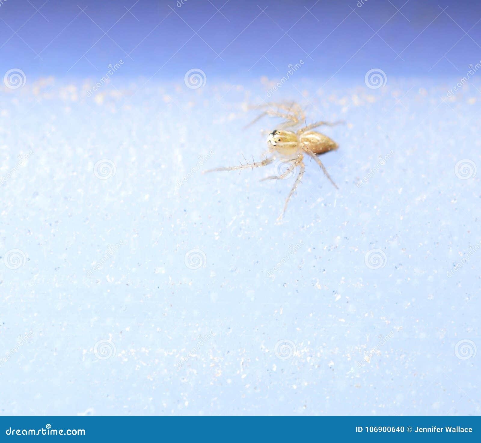 Dziecko Tęsk iść na piechotę Sac pająka na białym i błękitnym tle