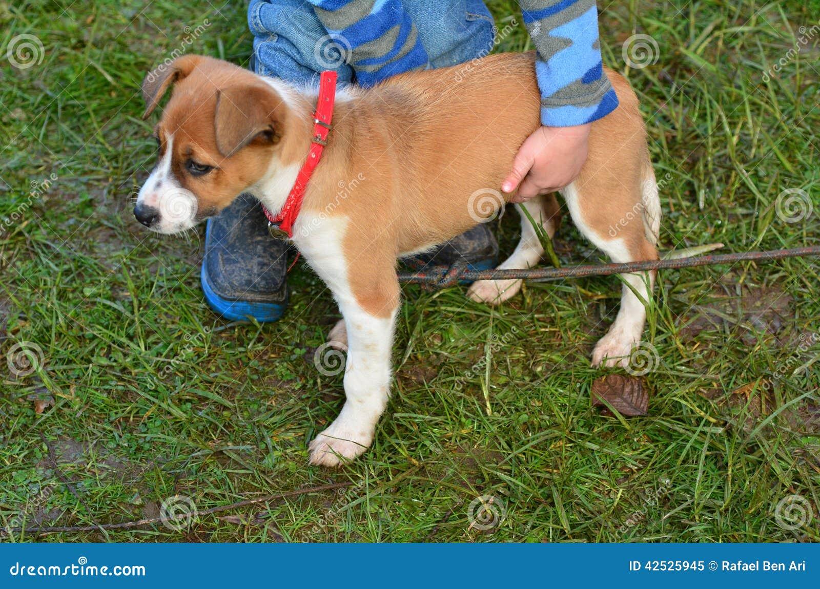 Dziecko trzyma szczeniaka psa