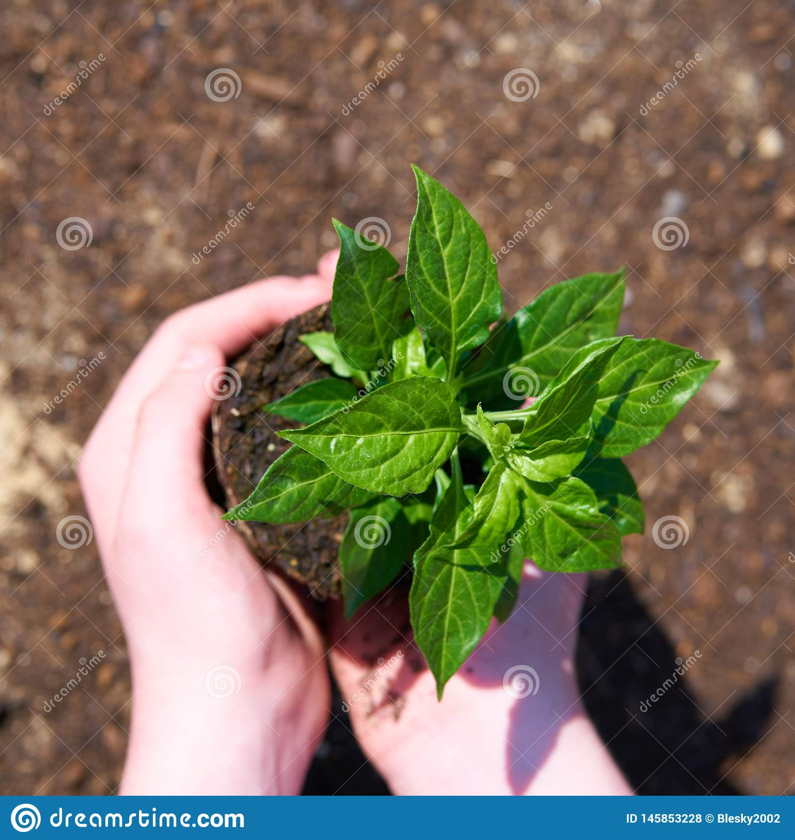 Dziecko z małą zieloną rośliną