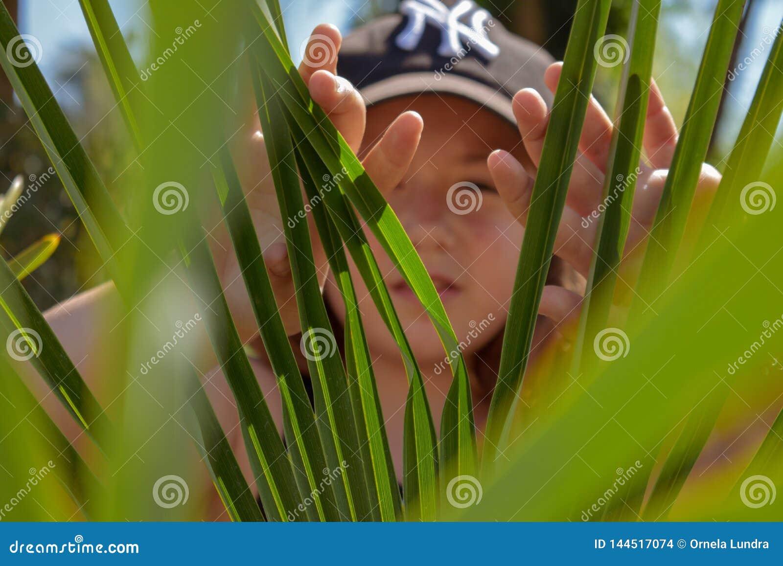 Dziewczyna chuje za zieleń liśćmi podczas