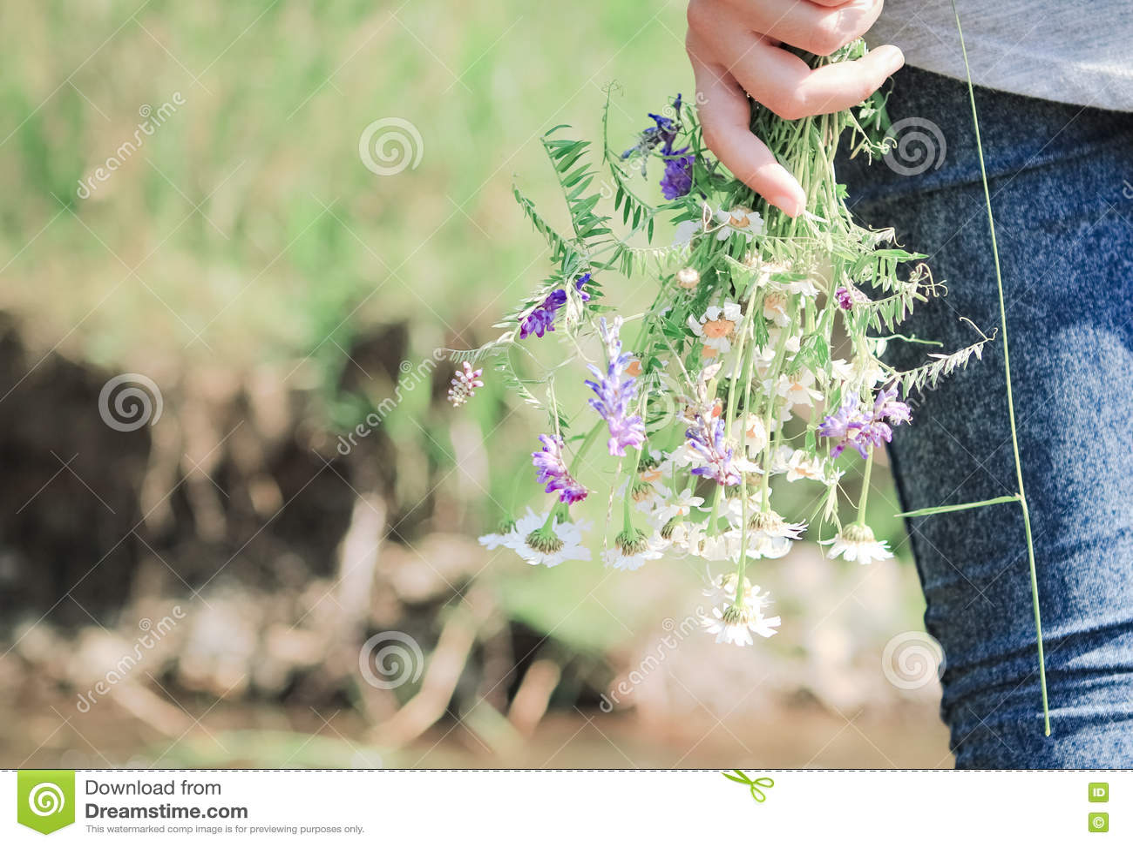 Dziewczyna holded chamomile