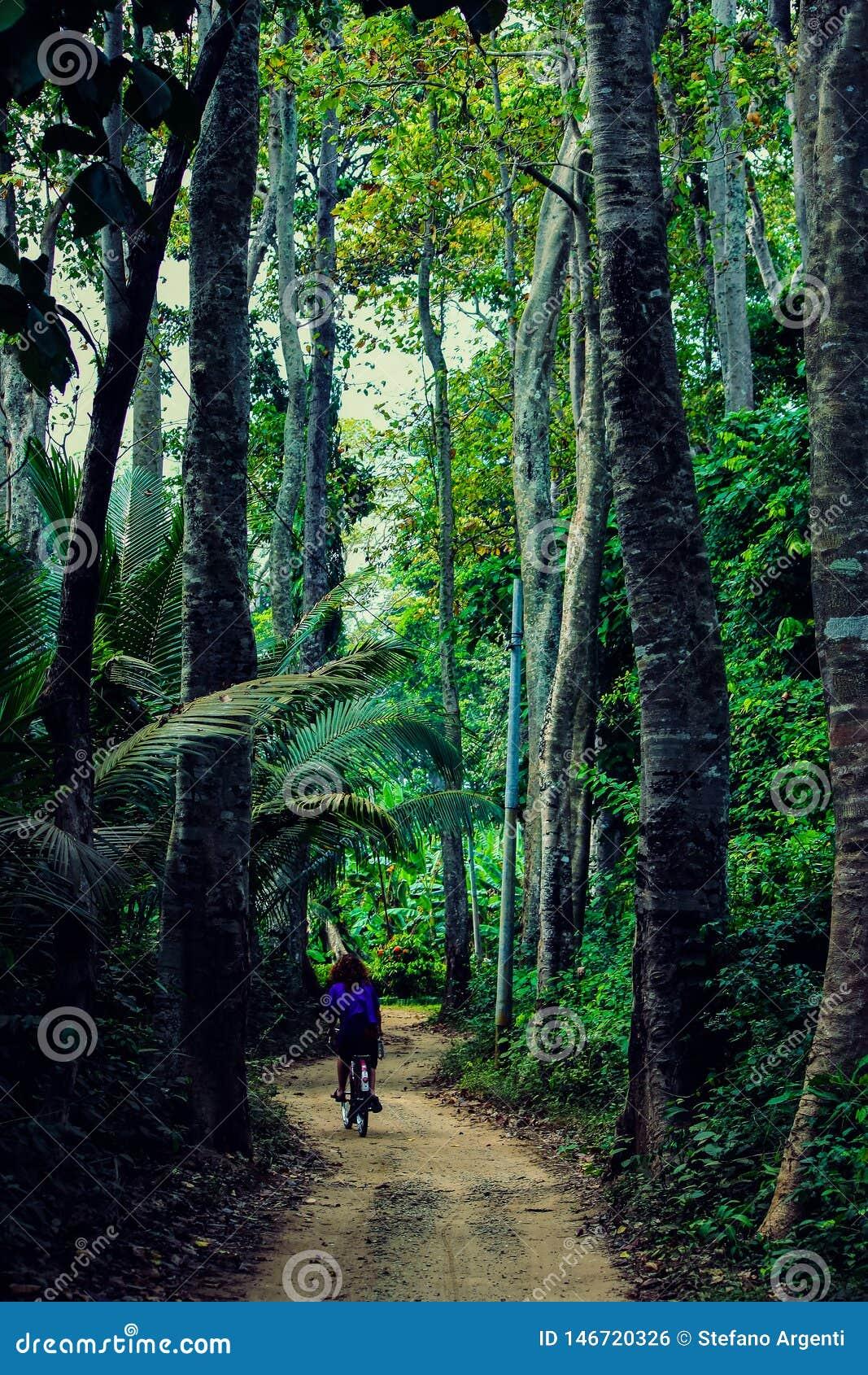 Dziewczyna na bicyklu jedzie wzdłuż ścieżki