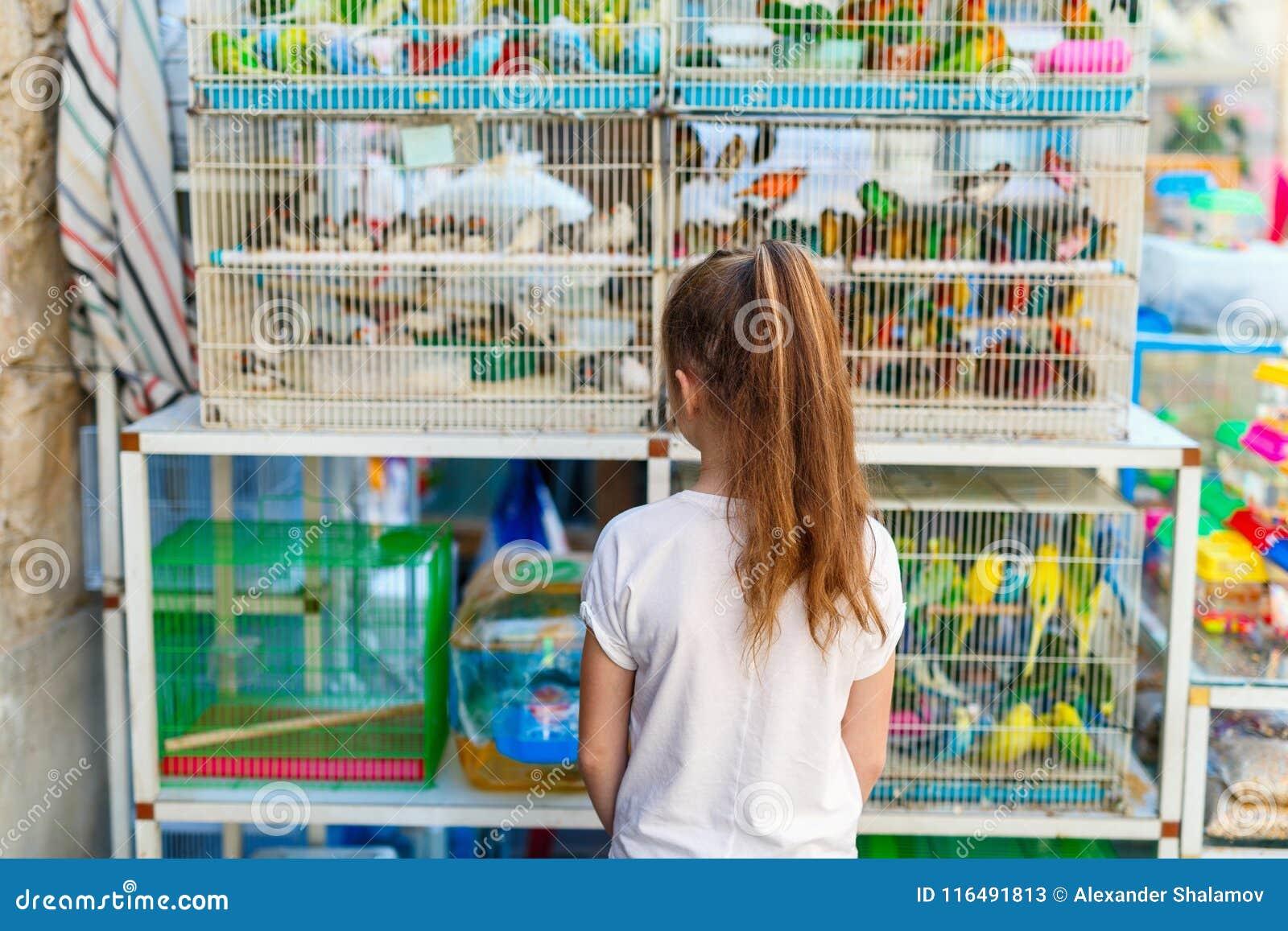 Dziewczyna przy ptaka rynkiem