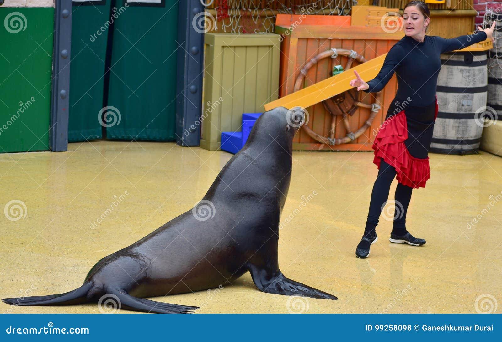 Dziewczyna trener przy Dennego lwa przedstawieniem