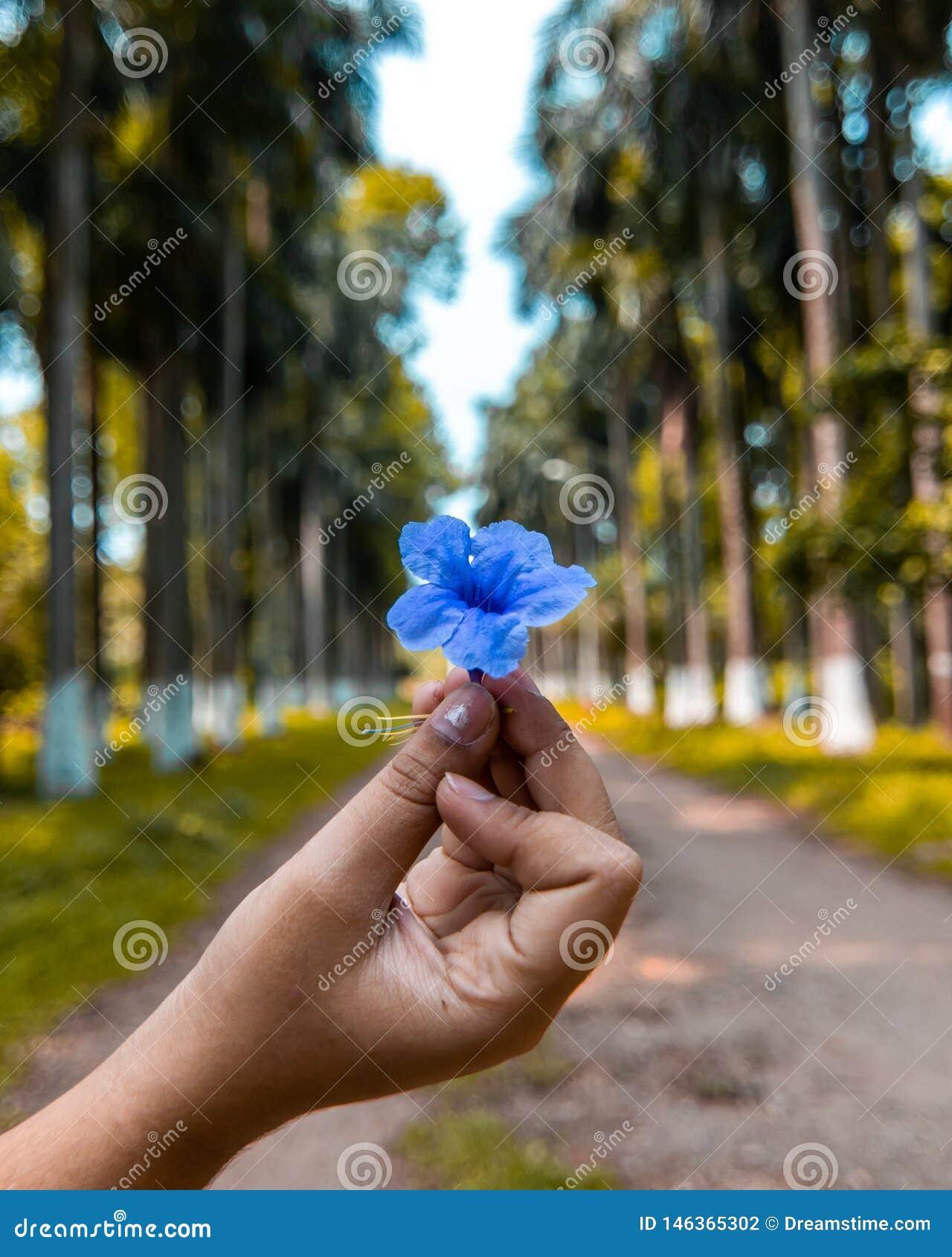 Dziewczyna trzyma pięknego błękitnego kwiatu w tge środku las w ind