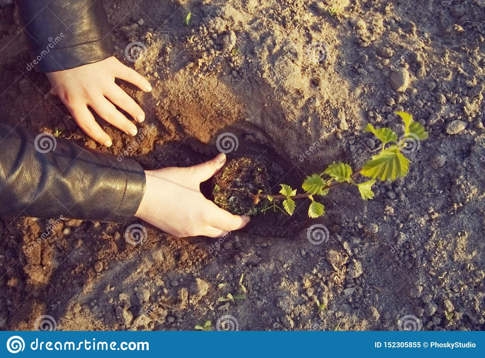 Dziewczyna zasadza m?odego drzewa
