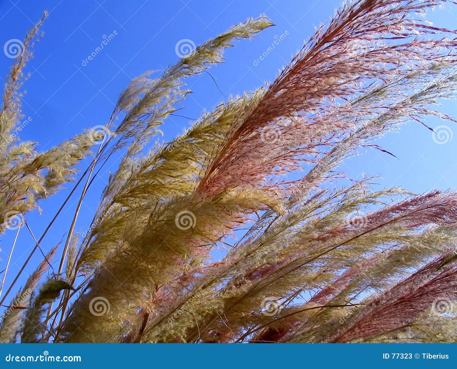 Dzika trawa