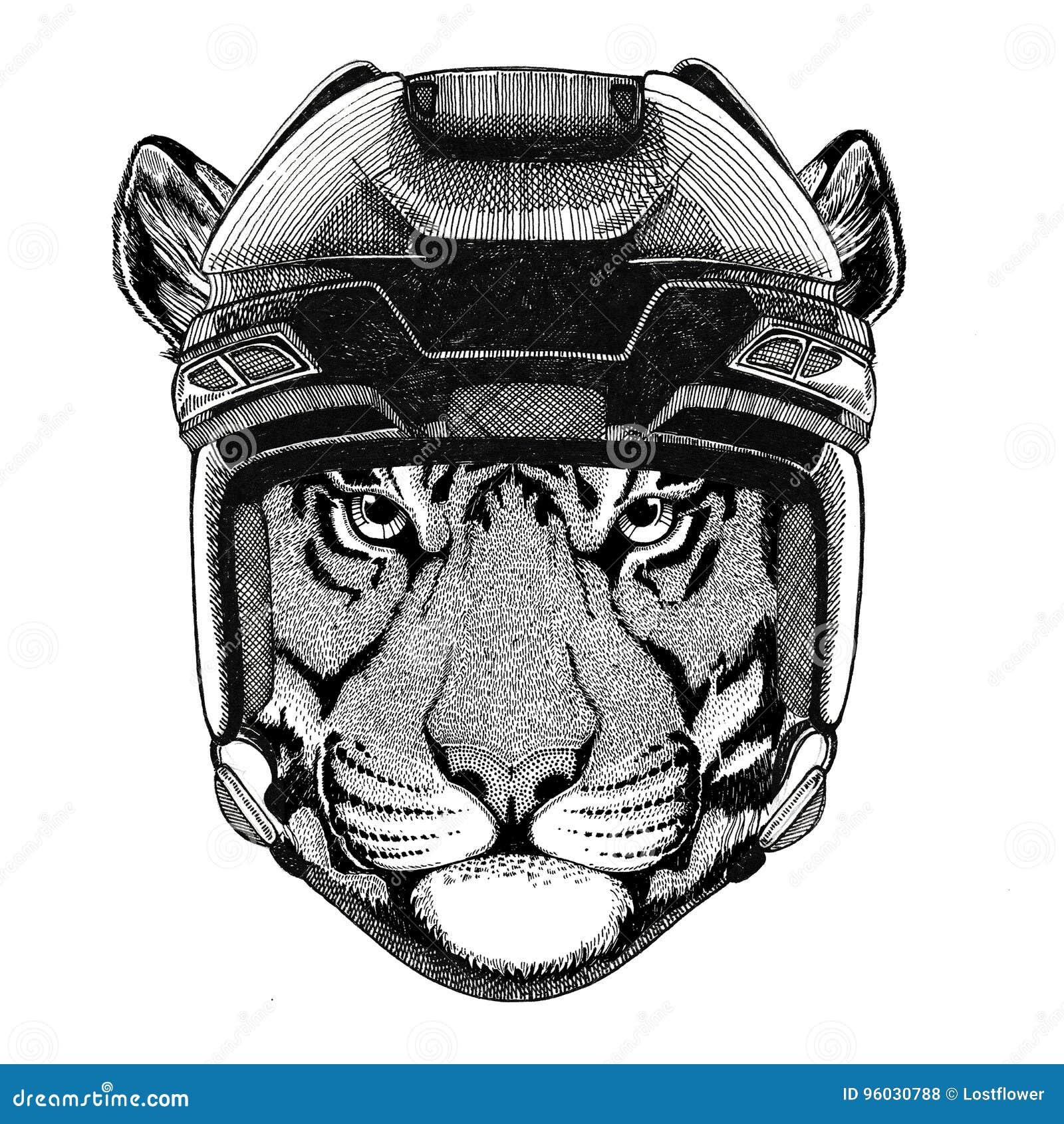 Dziki tygrysi Hokejowy wizerunku dzikie zwierzę jest ubranym hokejowego hełma sporta zimy sporta zwierzęcego Hokejowego sport