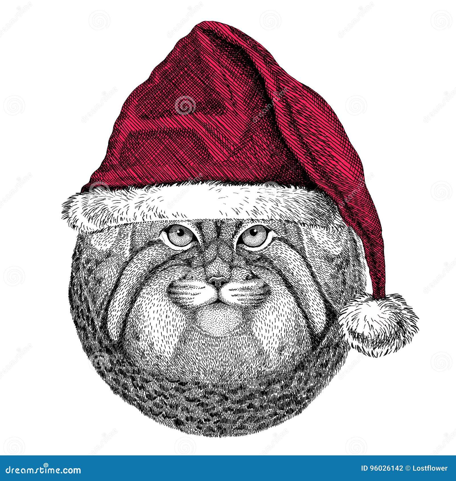 Dzikiego kota Manul Bożenarodzeniowy ilustracyjny dzikie zwierzę jest ubranym bożego narodzenia Santa Claus kapeluszowej Czerwone