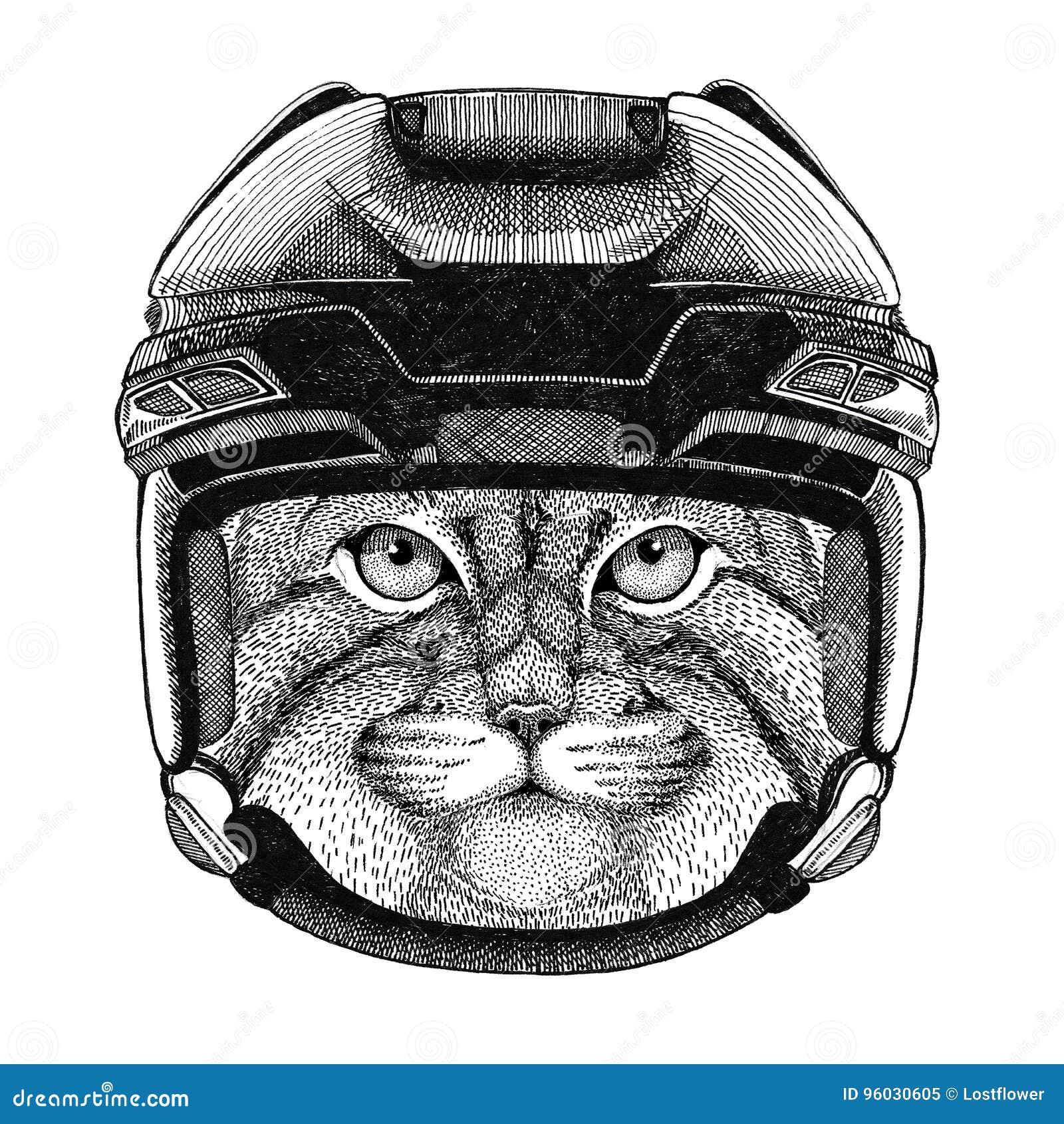 Dzikiego kota Manul wizerunku Hokejowy dzikie zwierzę jest ubranym hokejowego hełma sporta zimy sporta zwierzęcego Hokejowego spo