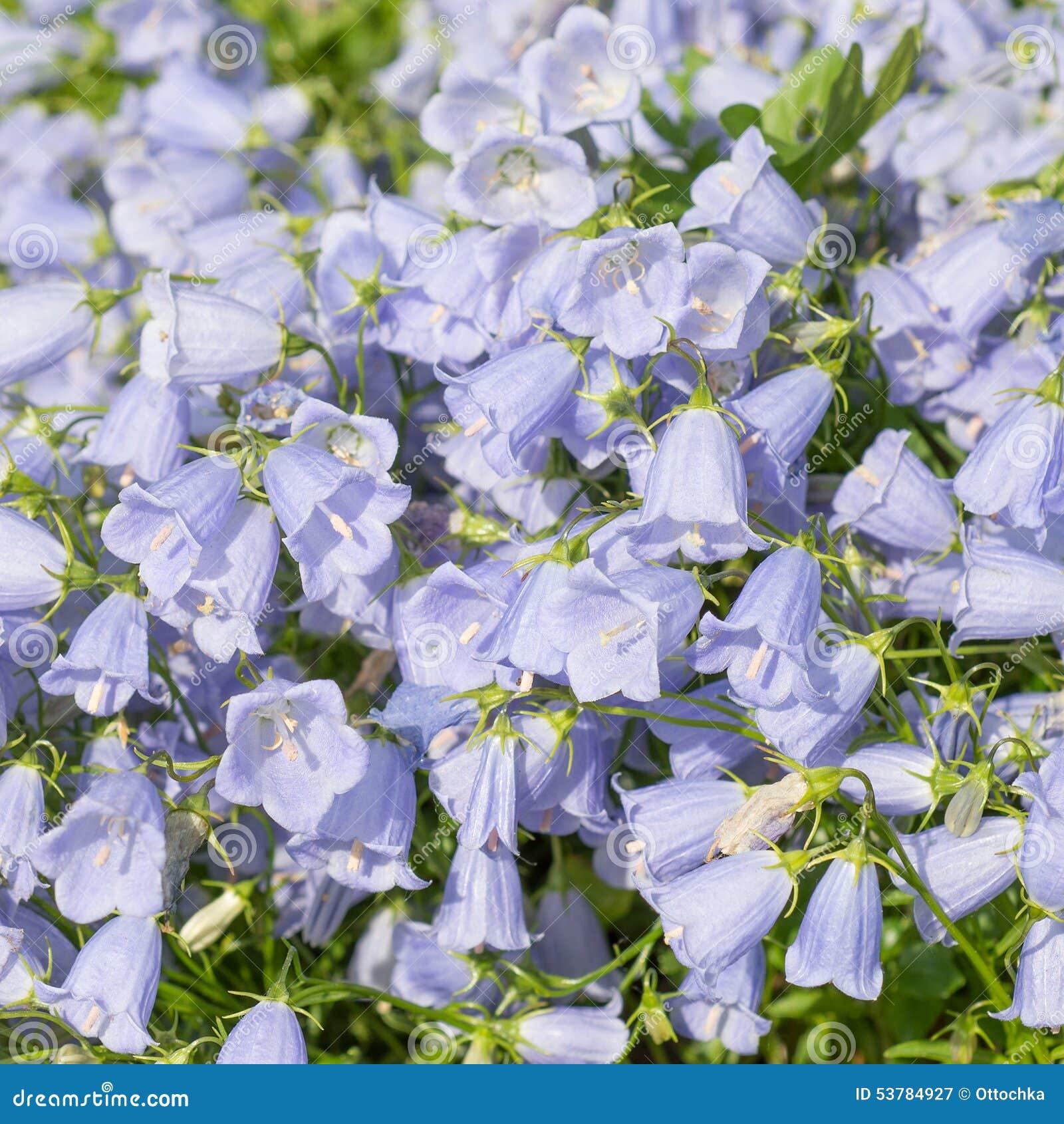 Dzwonów kwiatów grunge wizerunek