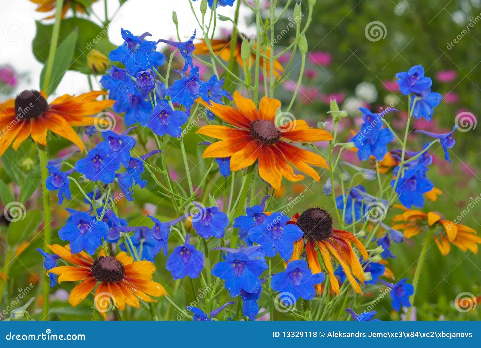 Dzwonkowy błękit zakończenia kwiat dzwonkowy