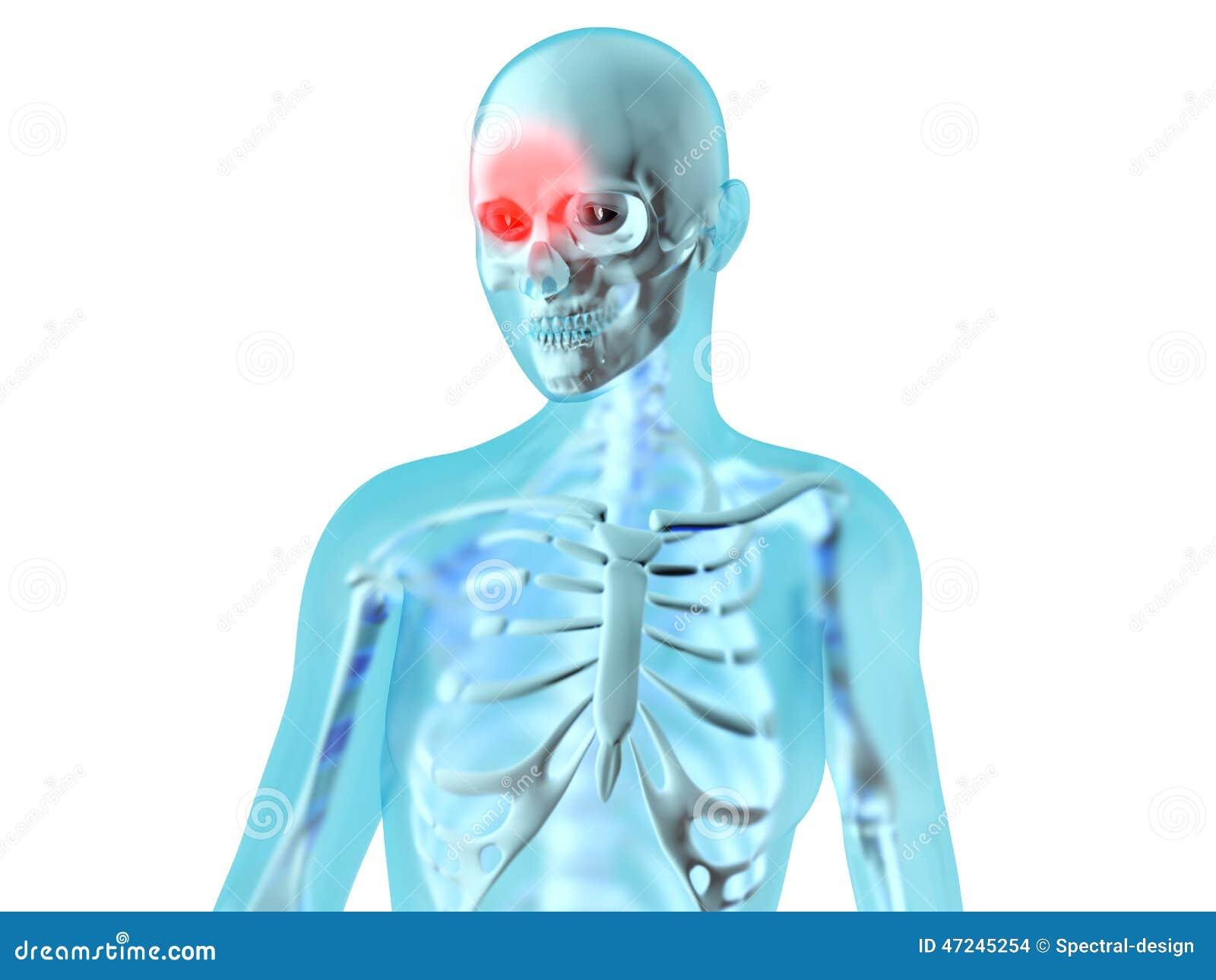 Żeńska anatomia - migrena