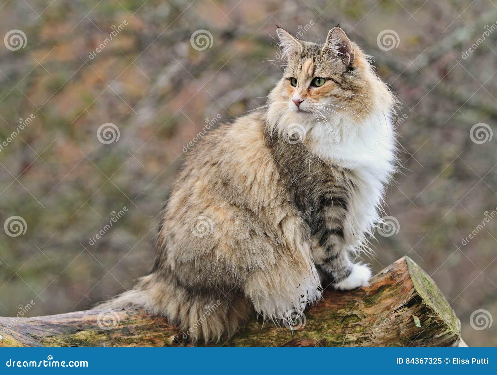 Żeński kot