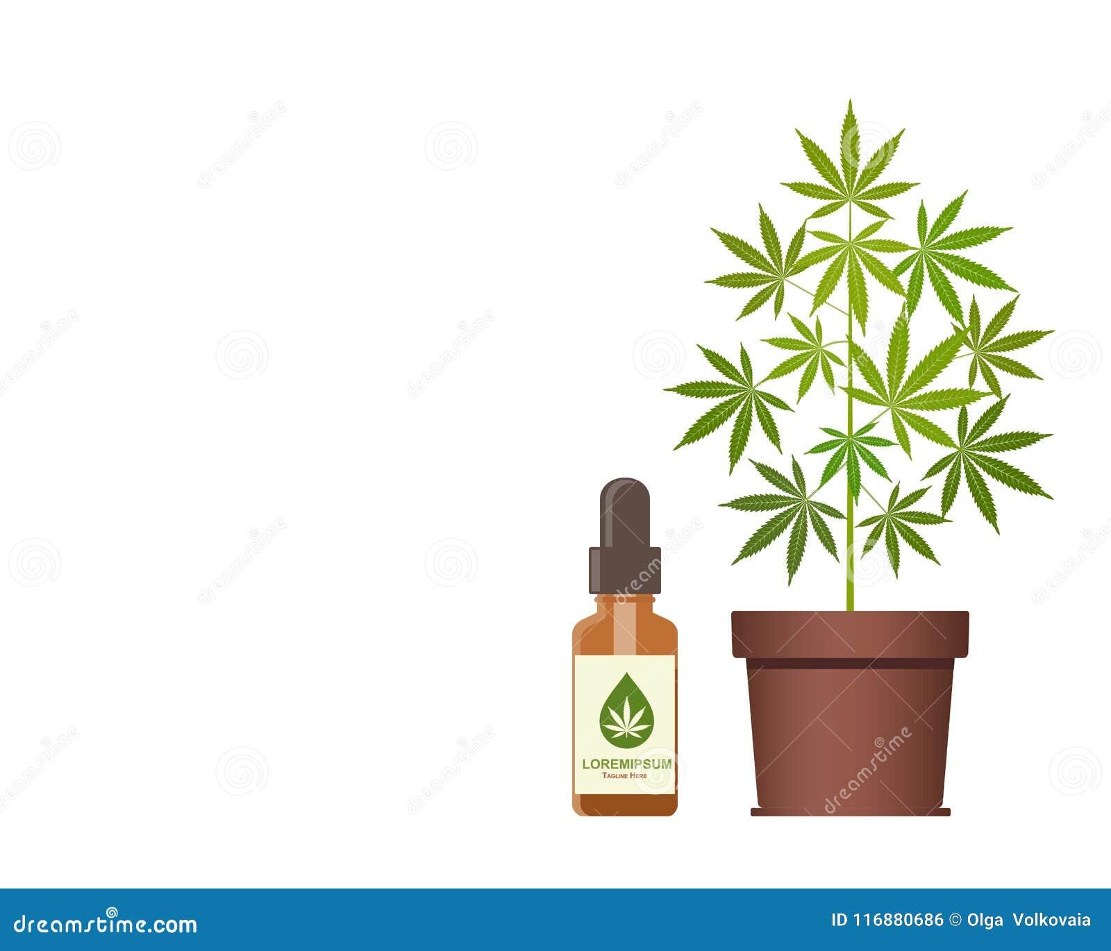 E Масло конопли Медицинская марихуана