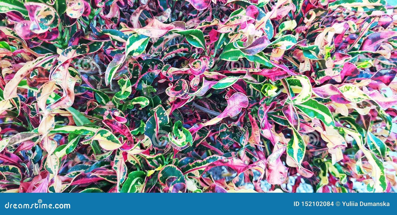 E 美好的五颜六色的花卉布局 热带叶子背景