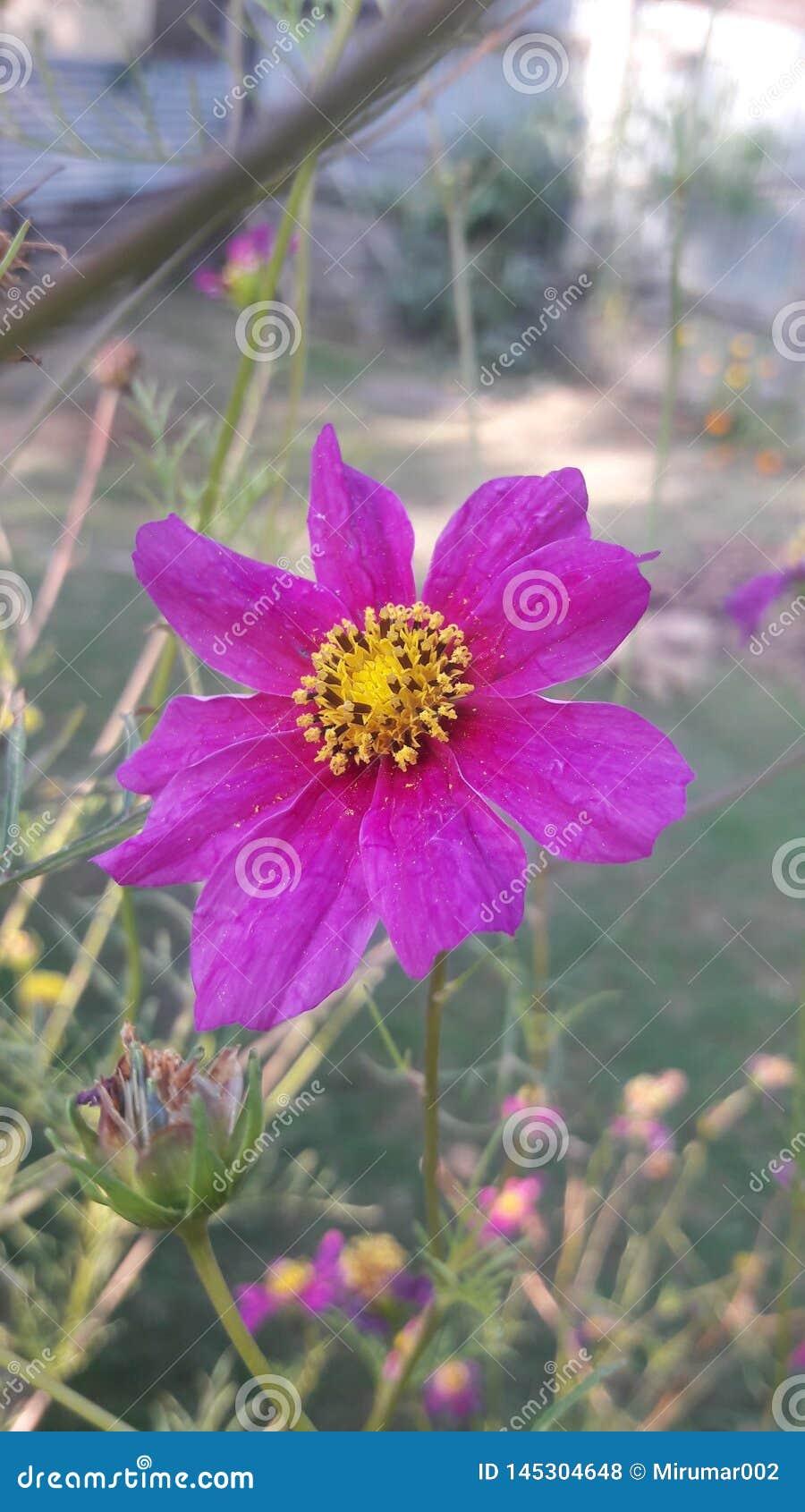 紫罗兰色花