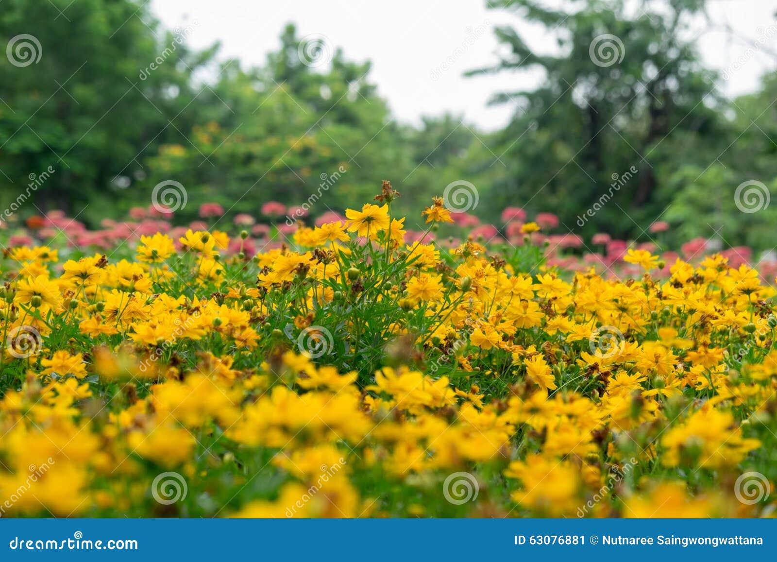 Download E image stock. Image du couleur, texture, frais, zone - 63076881