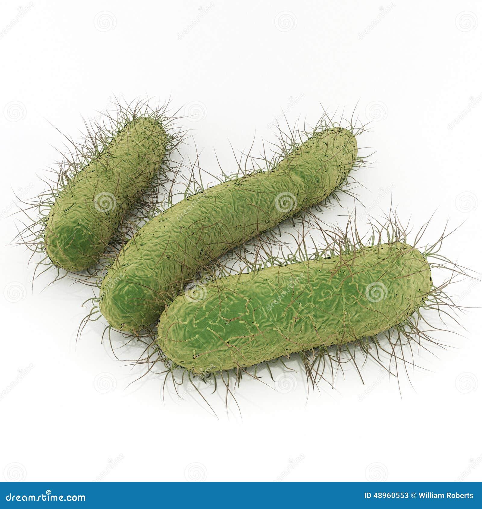 E bakterier coli e
