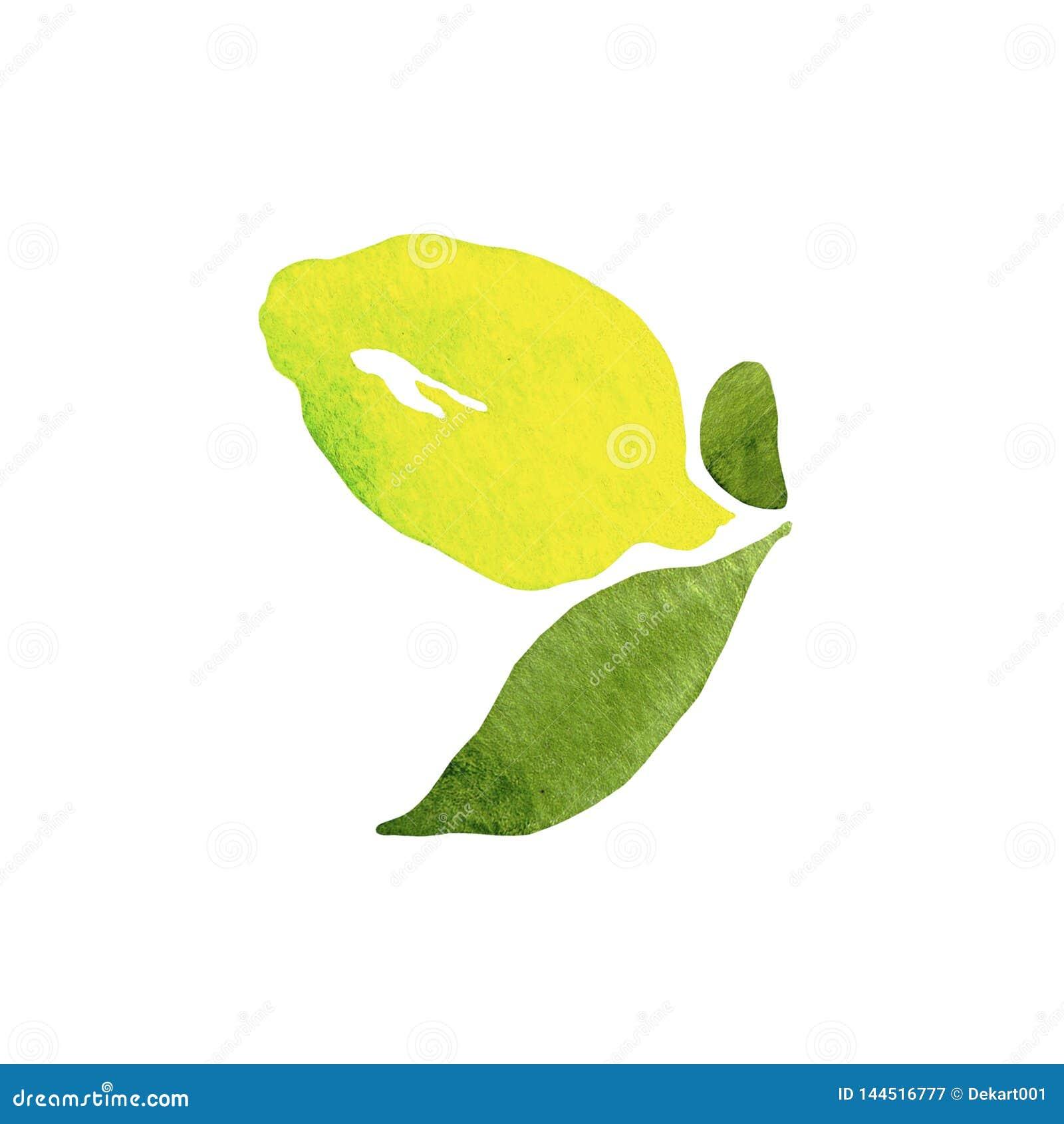 E illustration vektor f?r bild f?r designelementillustration citrus orange pamela f?r samlingsgrapefruktcitron