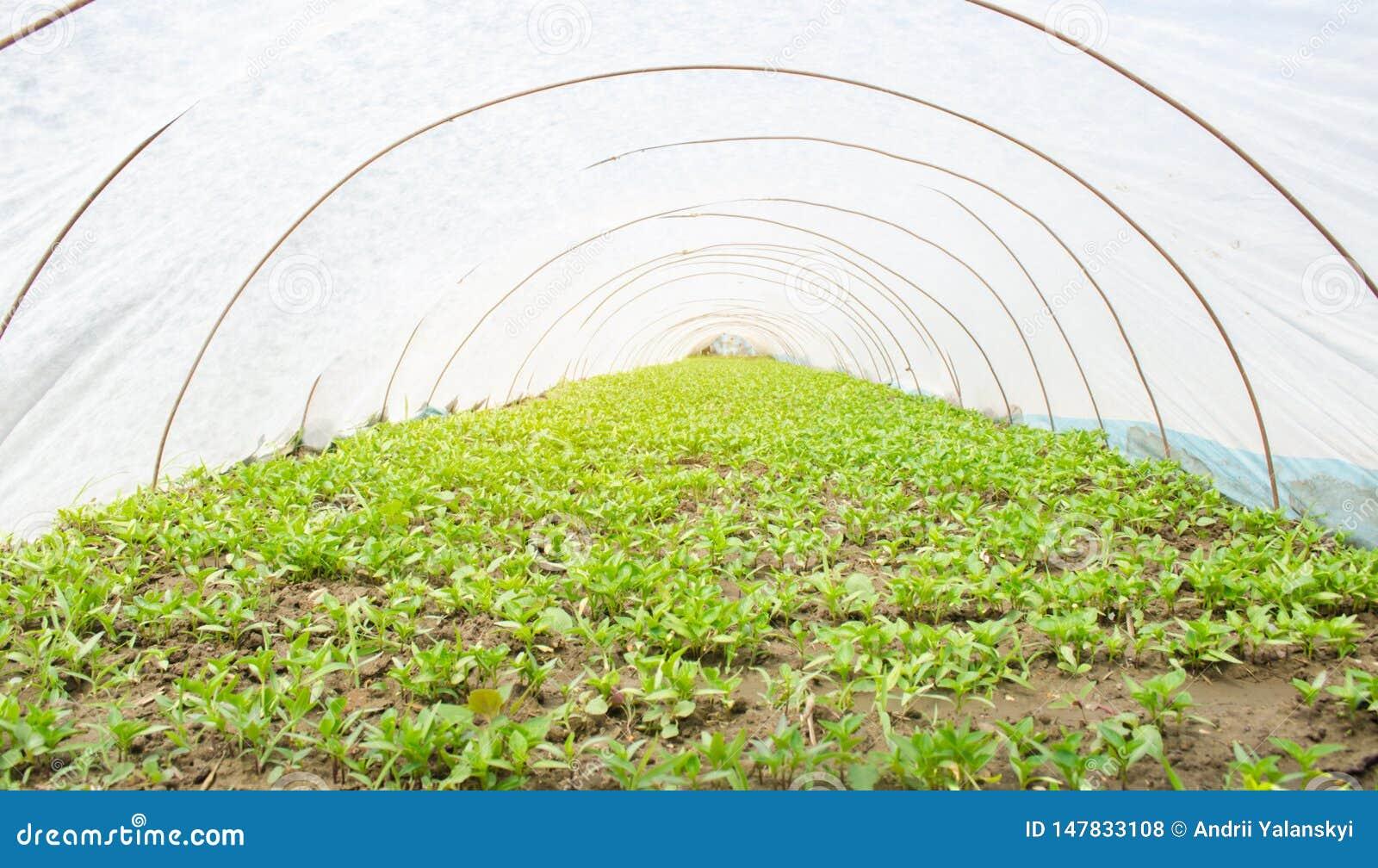 E L?gumes organiques croissants Agriculture affermage