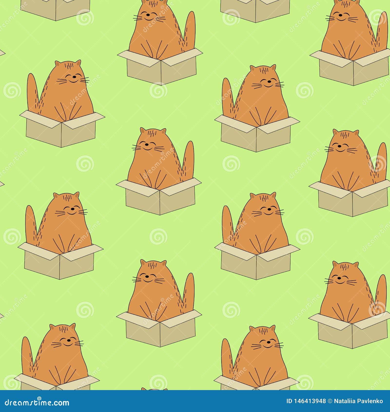 E r 宠物在箱子坐 墙纸和背景美丽的