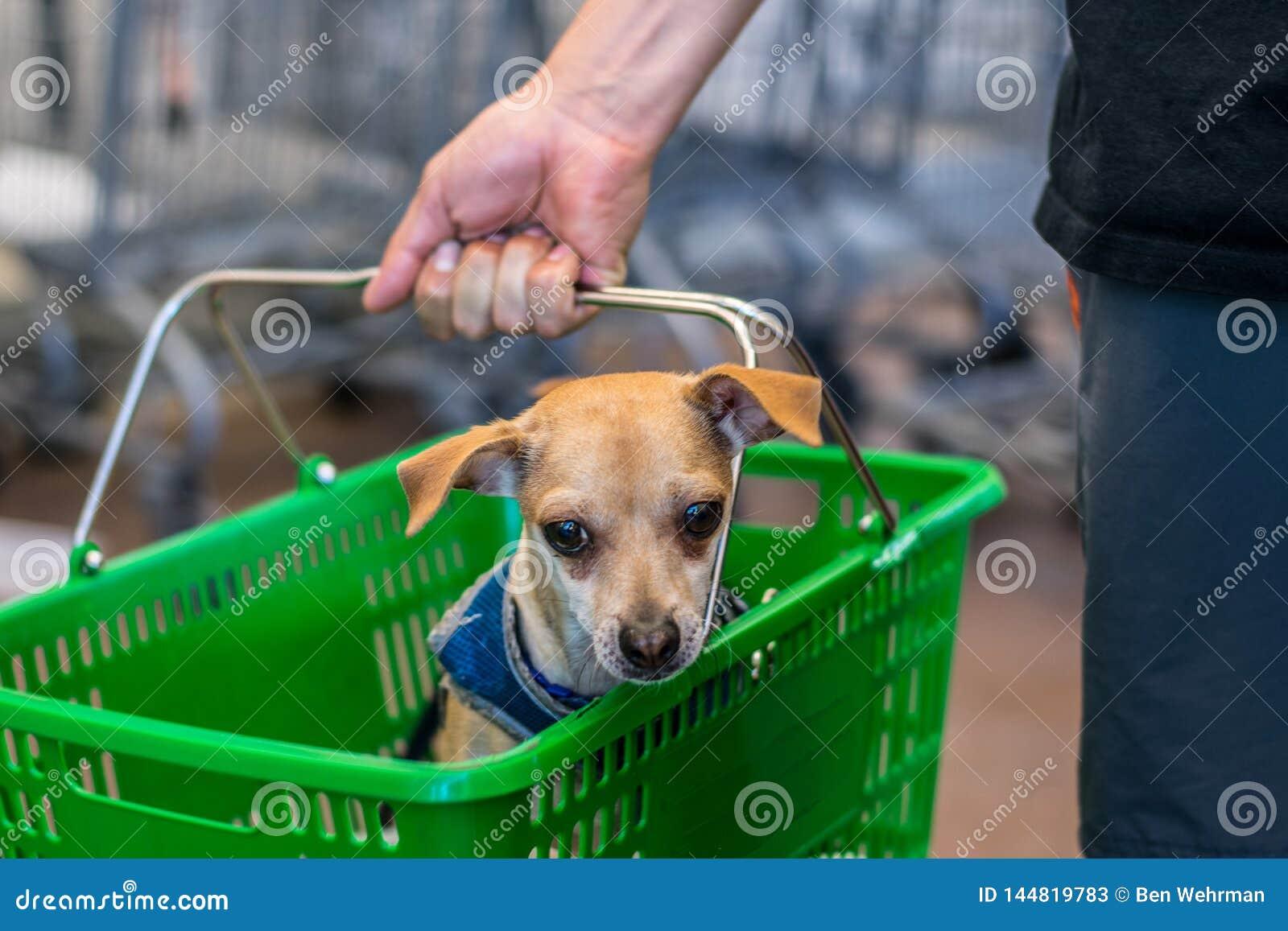 Χαριτωμένο σκυλί σε ένα καλάθι