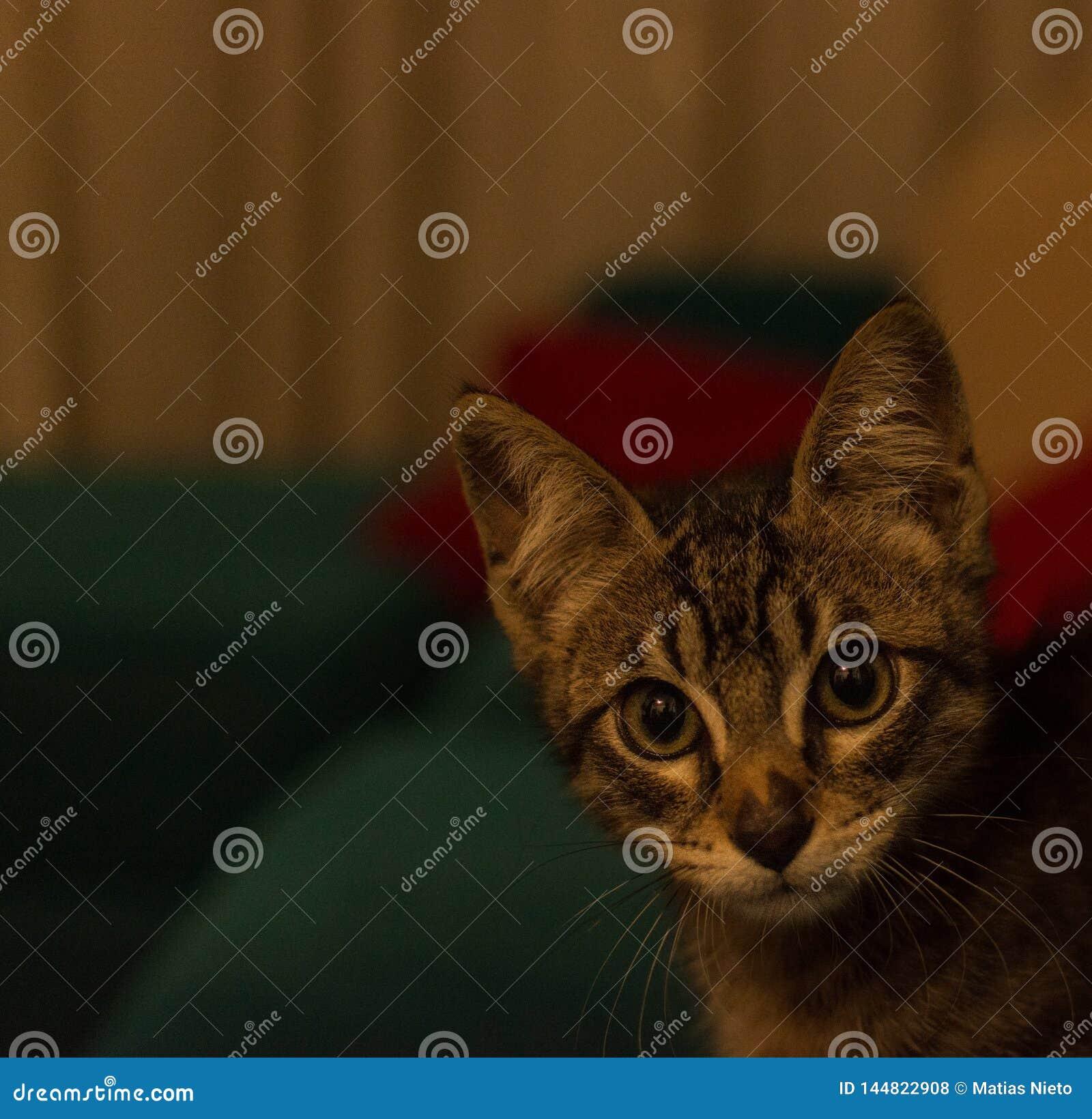 Милый котенок смотря камеру