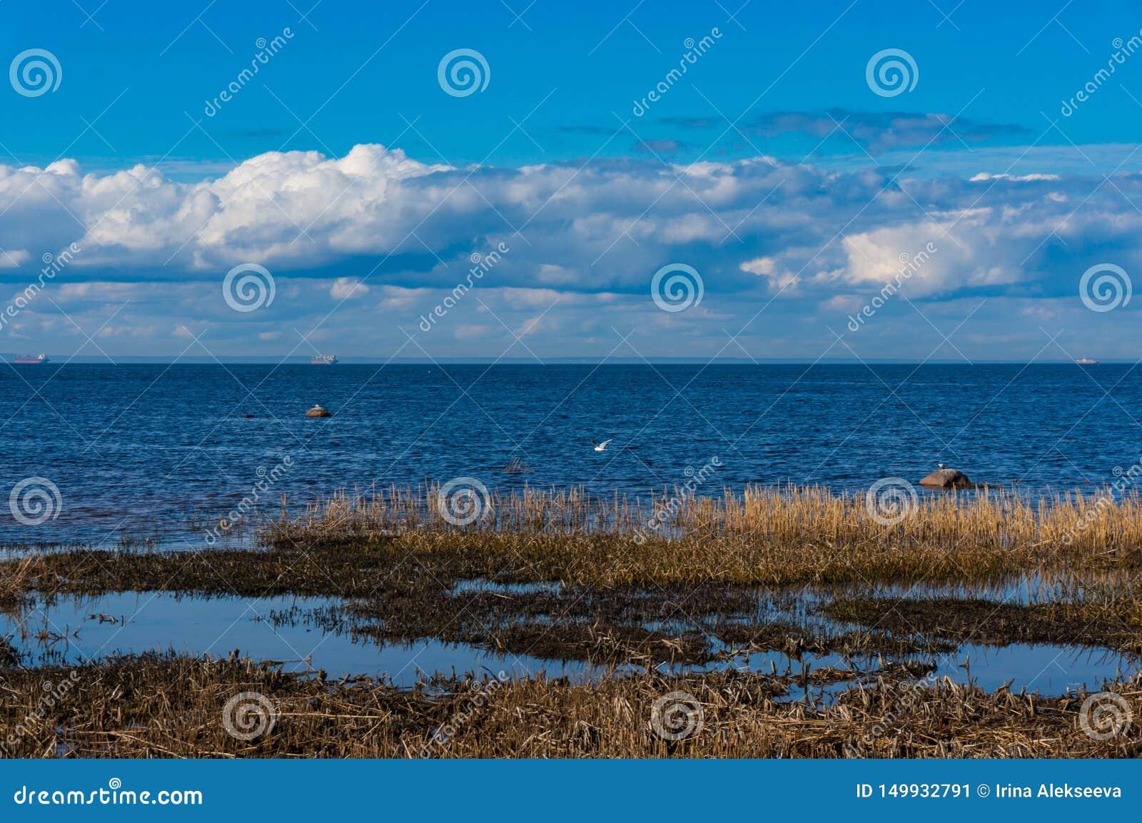 Auf dem Ufer des Finnischen Meerbusens im Vorfrühling an einem klaren sonnigen Tag Frühling auf der Bucht Südküste des Finnischen