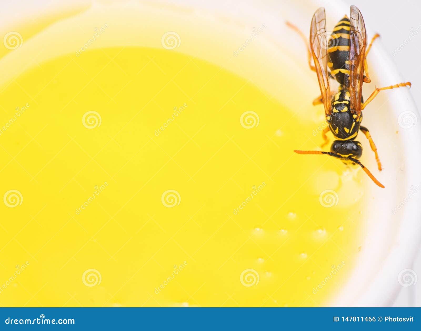 蜂蜜生产 自然蜂蜜和蜂关闭 蜂或黄蜂在杯子蜂蜜白色背景 甜自然花蜜
