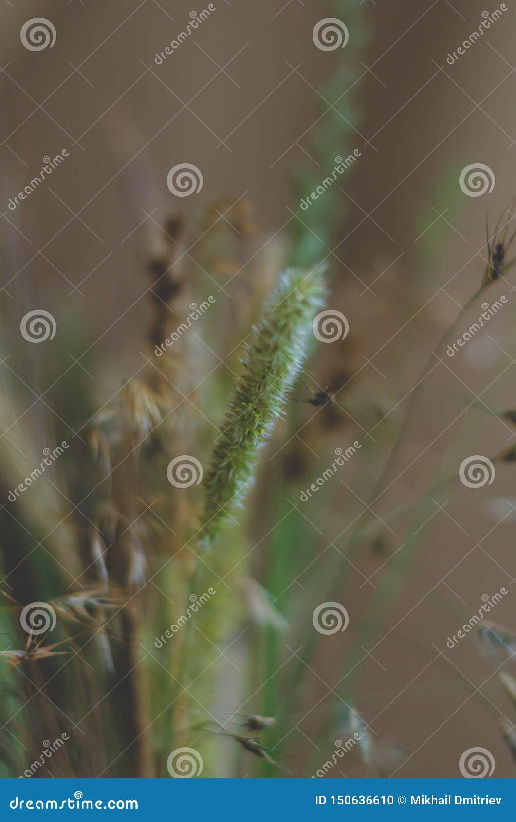 Stark suddig bakgrund för design i engräsplan signal Torra och nya blommor och örter i en bukett stort stark suddighet