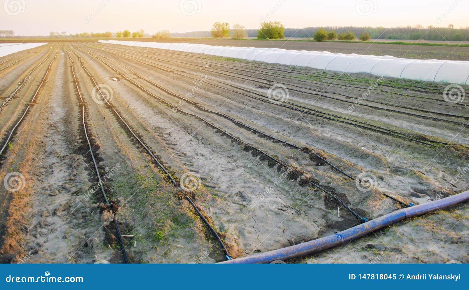 E r V?xande organiska gr?nsaker lantbruk Jordbruk V?r