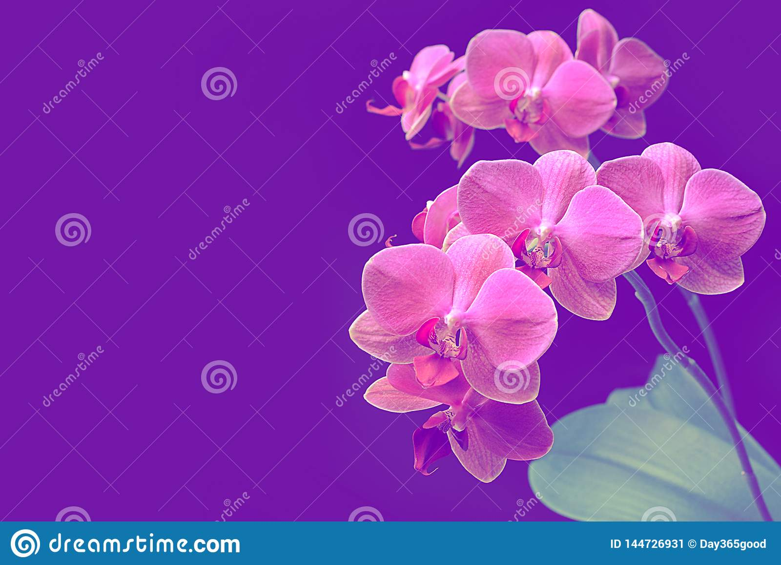 E Tak van orchidee Boeket