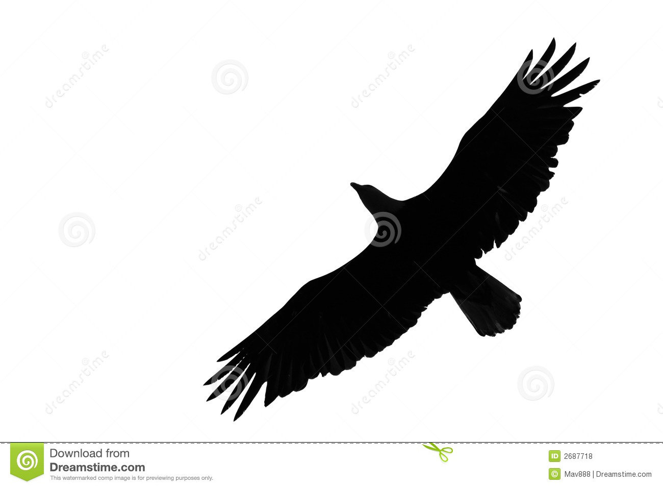 bald eagle wing span
