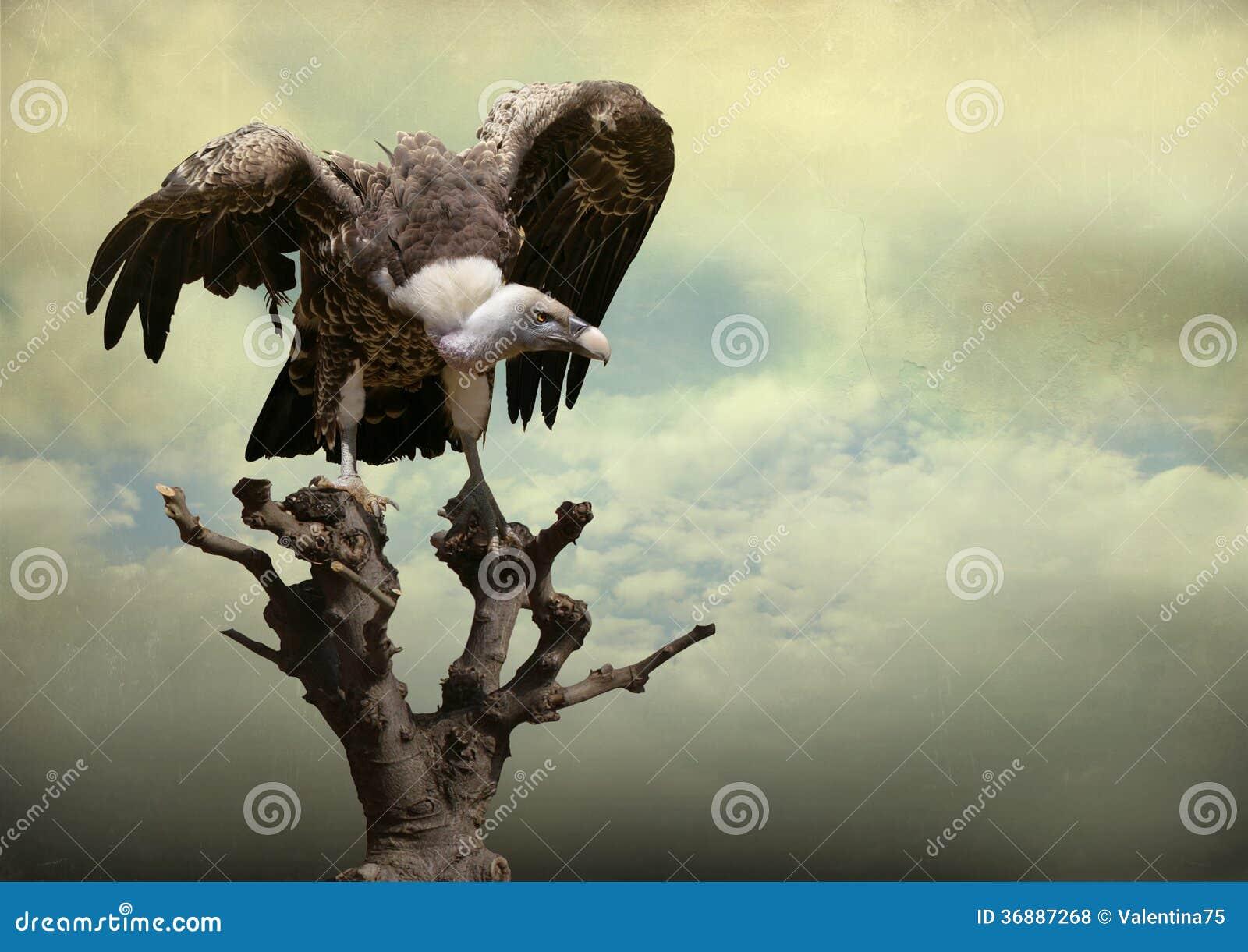 Download Eagle fotografia stock. Immagine di stupore, artistico - 36887268