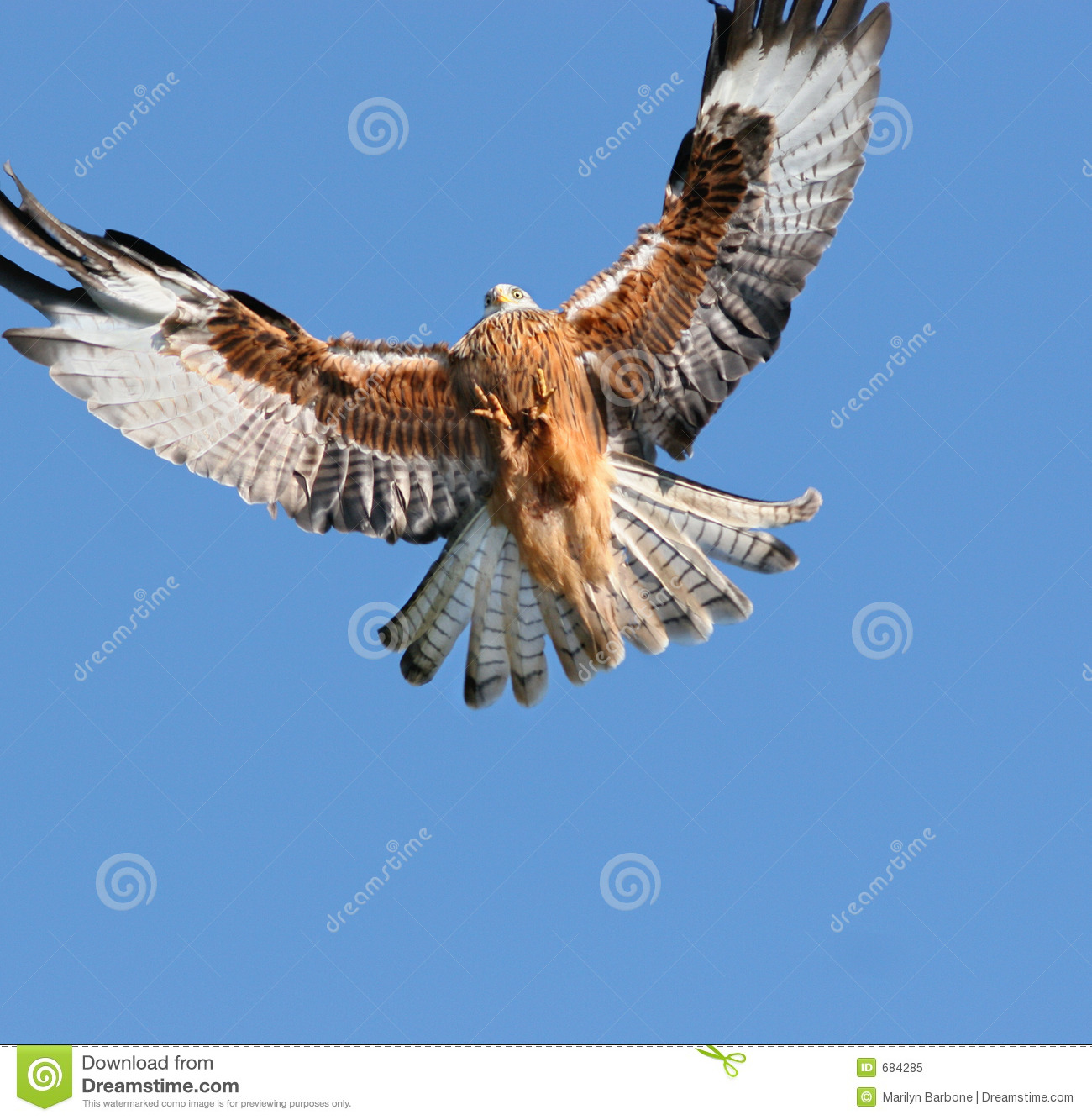 Eagle Approaching