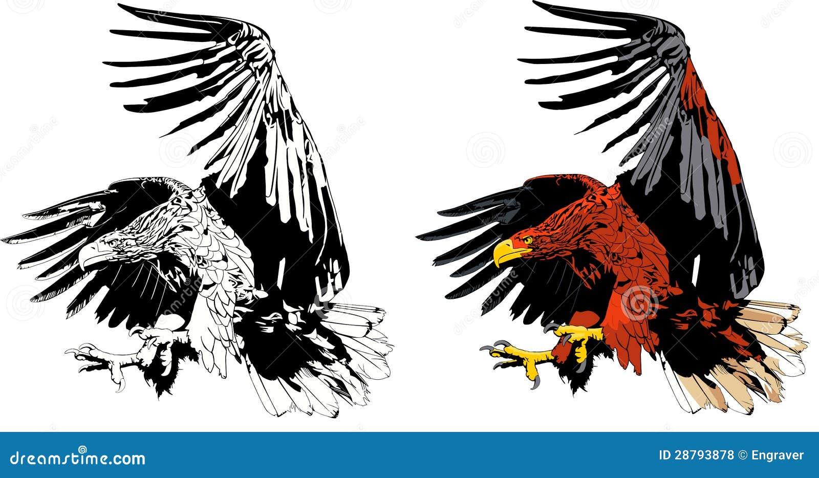 eagle attack royalty free stock photos image 28793878