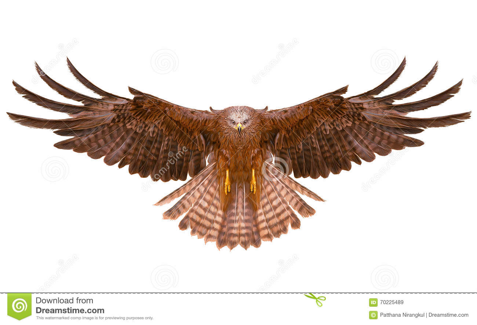 Eagle bird flying hand draw