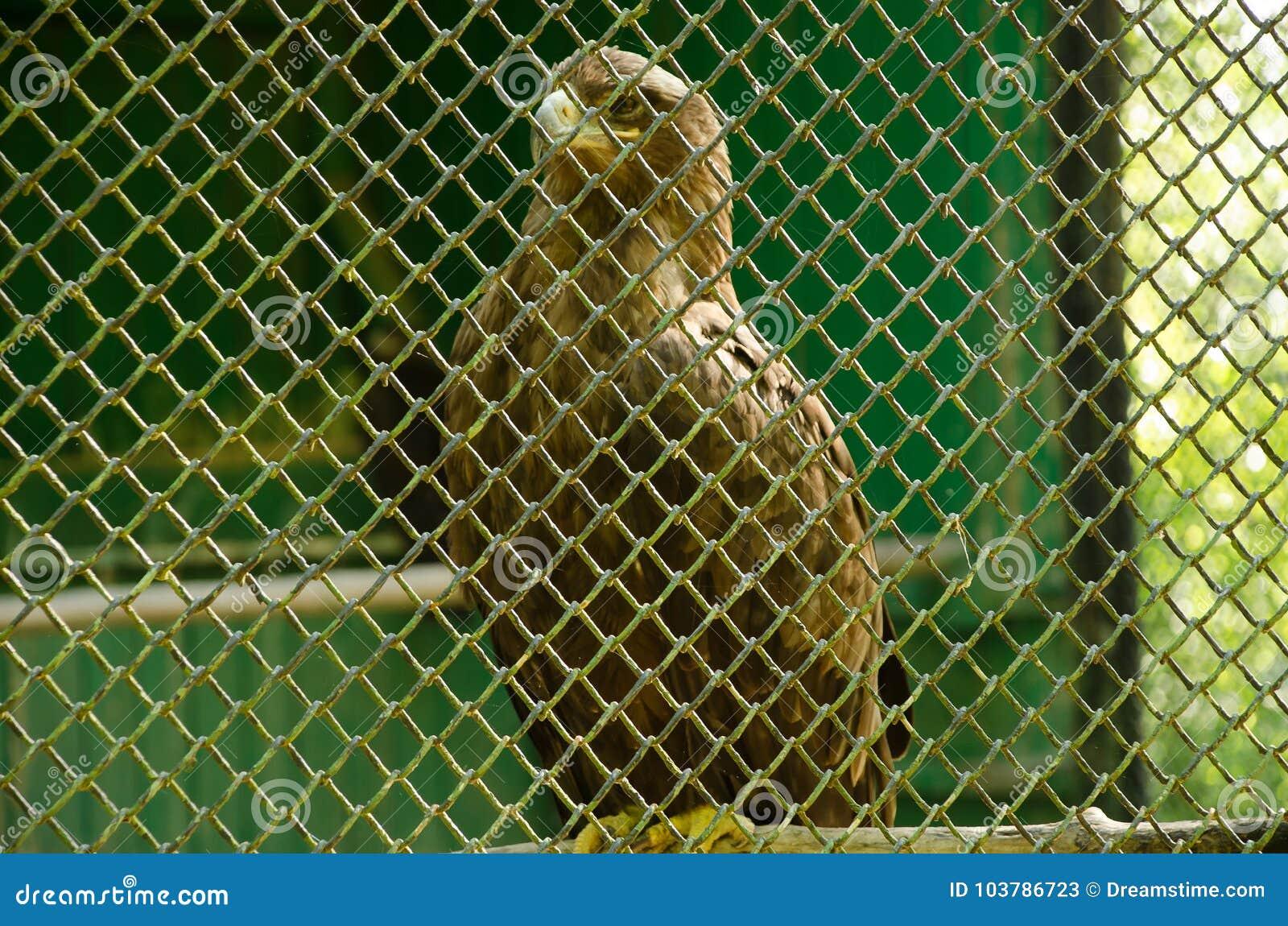 Bird of prey in a cage