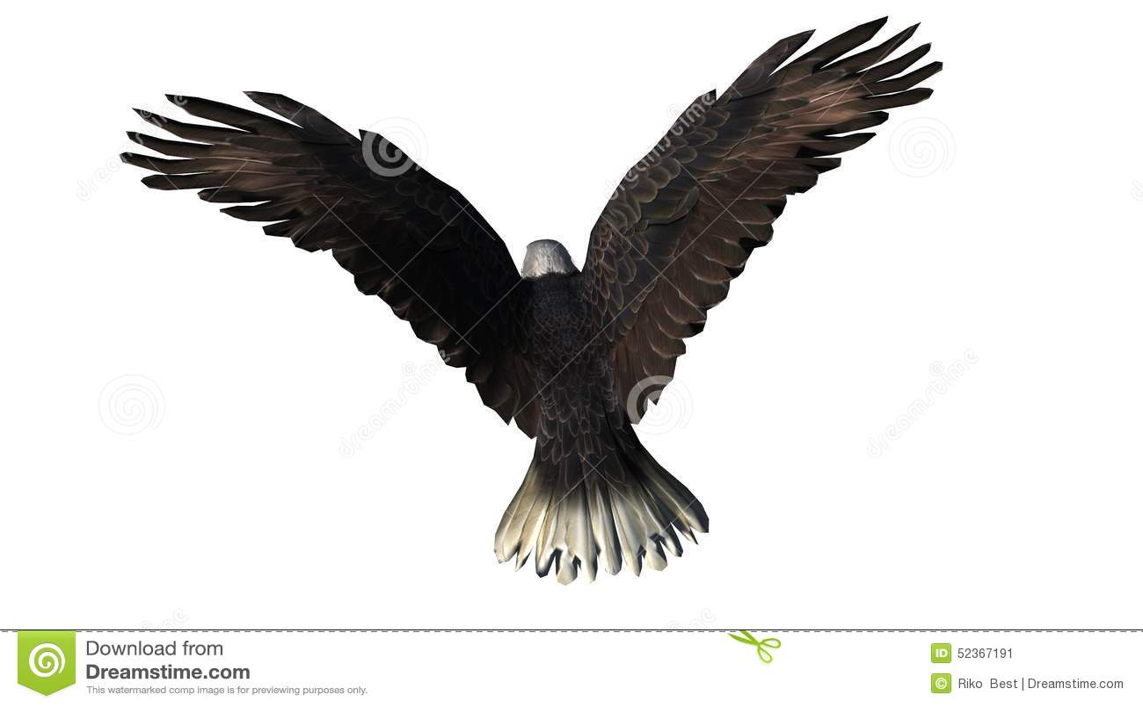 Eagle calvo in mosca - fondo bianco