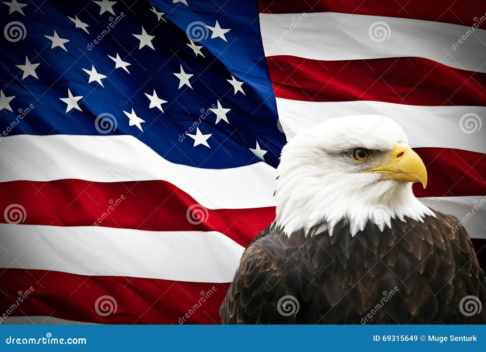 Eagle calvo norteamericano en bandera americana