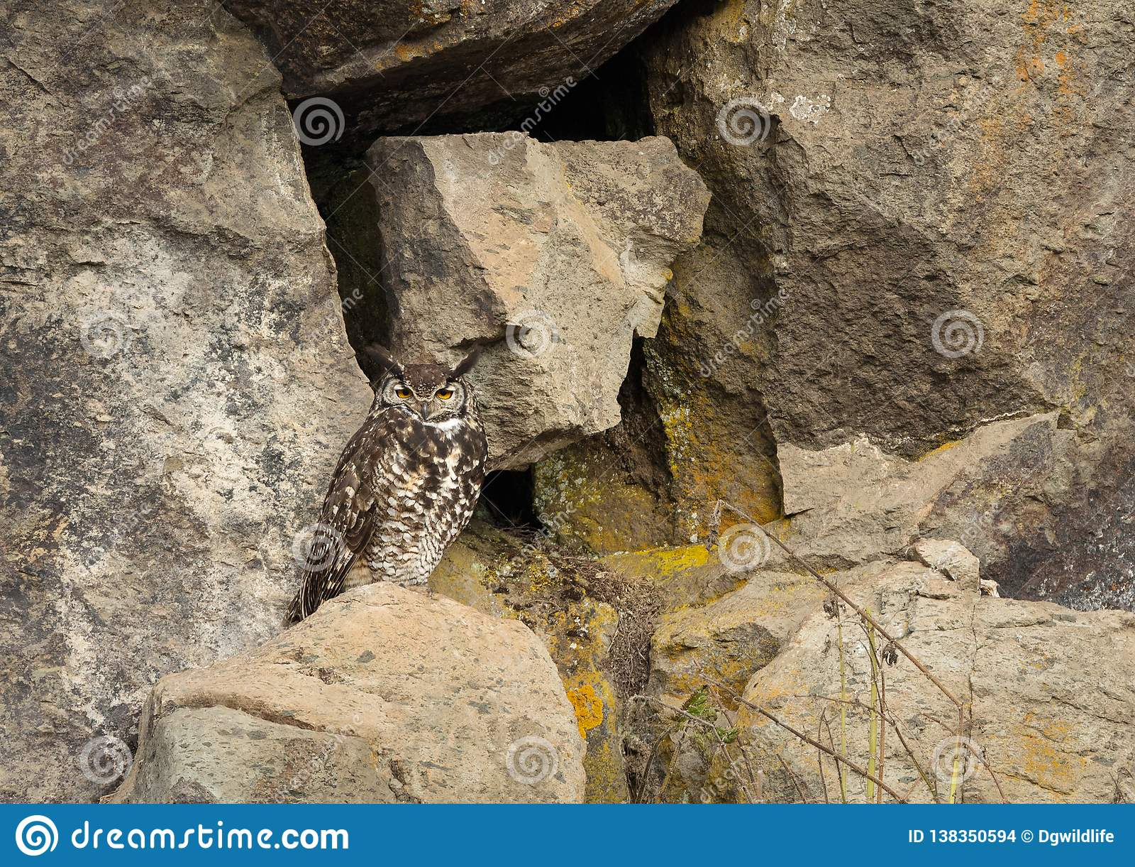 Eagle-coruja do cabo que senta-se em uma rocha