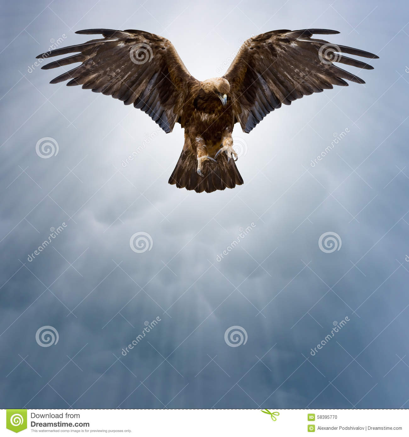 Eagle In The Dark Sky With Spread Wings Stock Photo