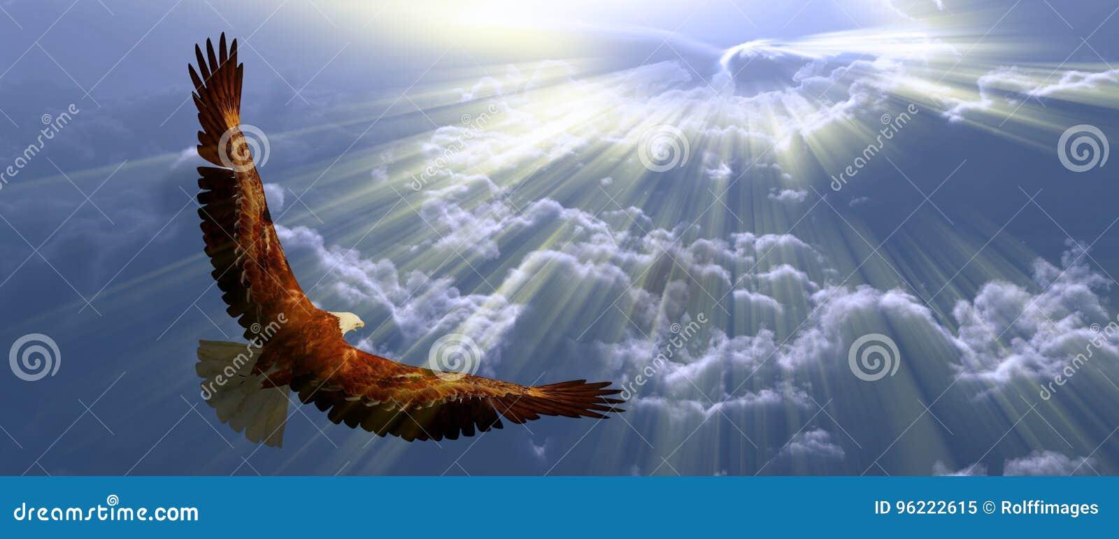 Eagle em voo
