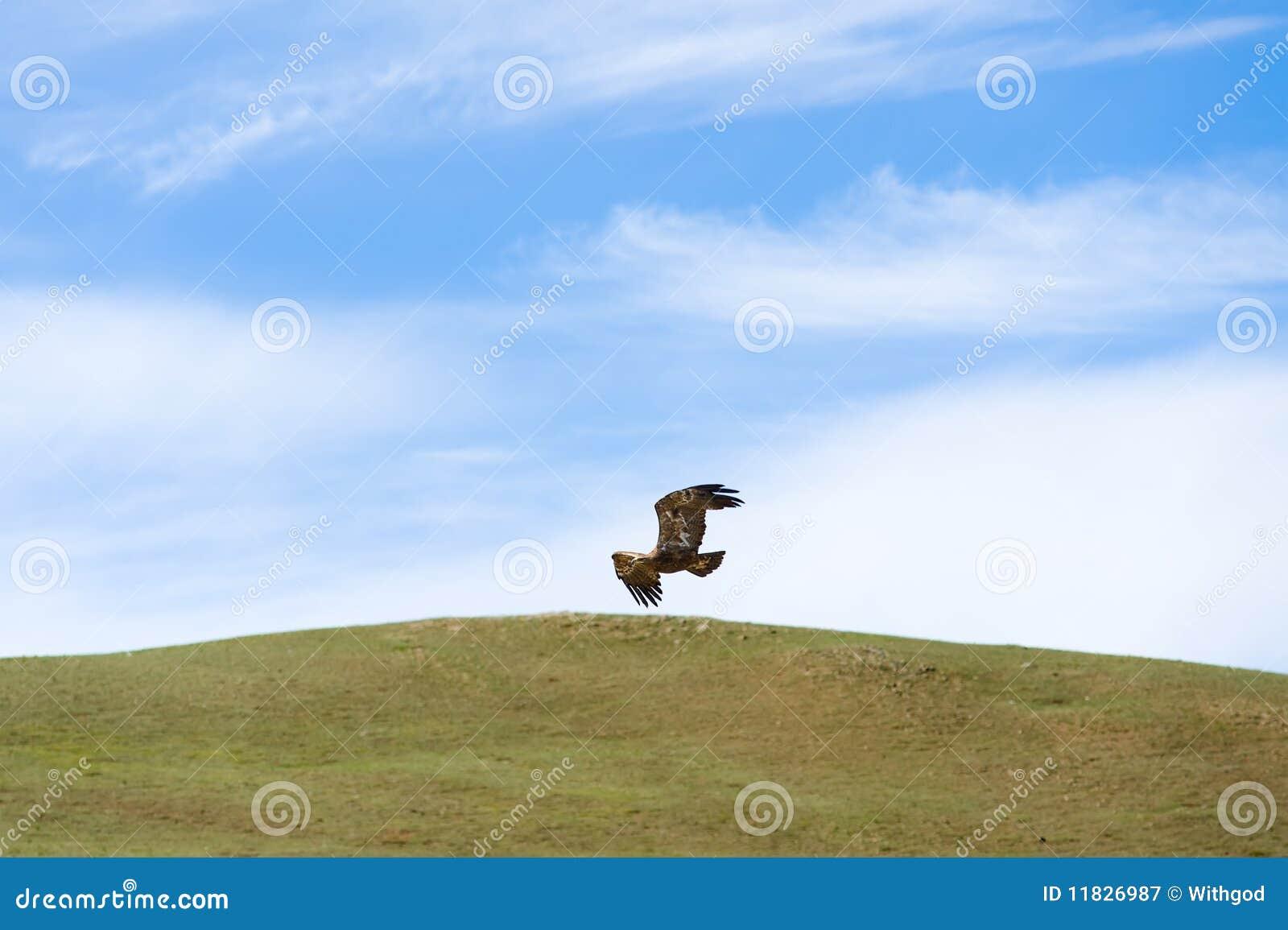 Eagle flying over steppe
