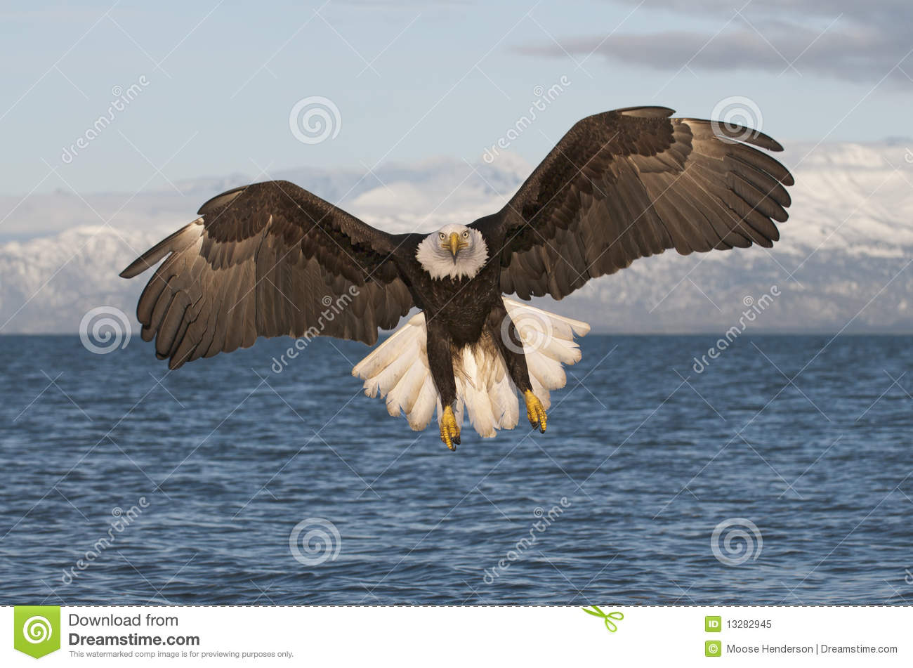 Eagle Flying Toward Viewer Royalty Free Stock Photo