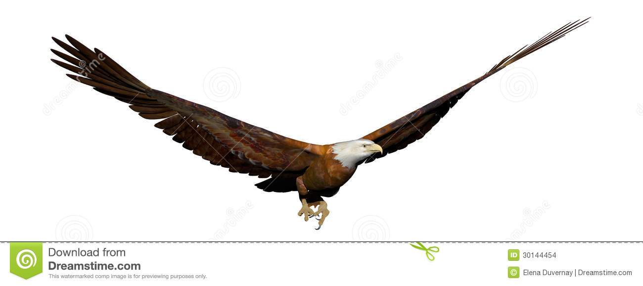 bald eagle render by - photo #12