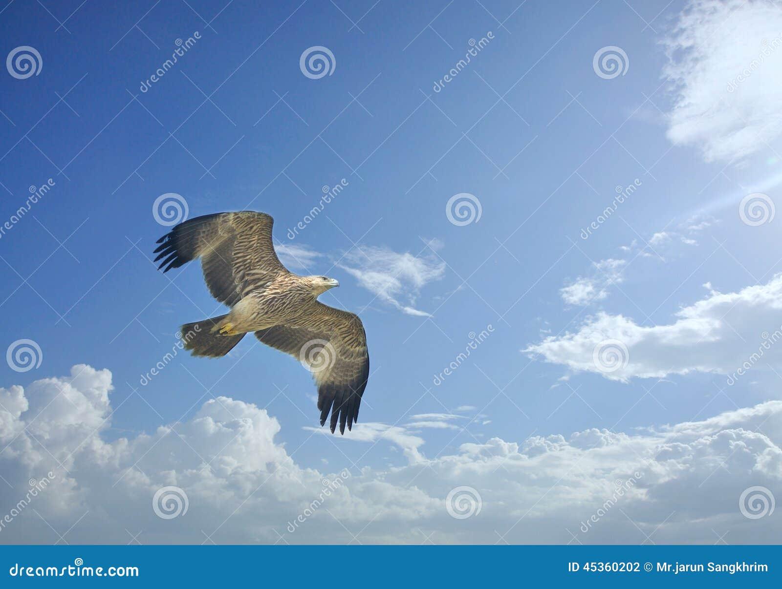 Eagle impérial