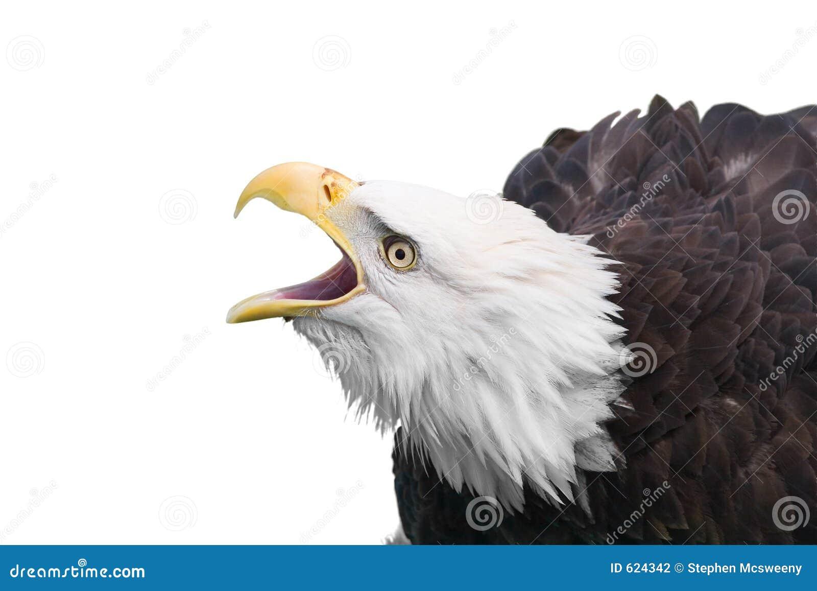 Eagle isolated