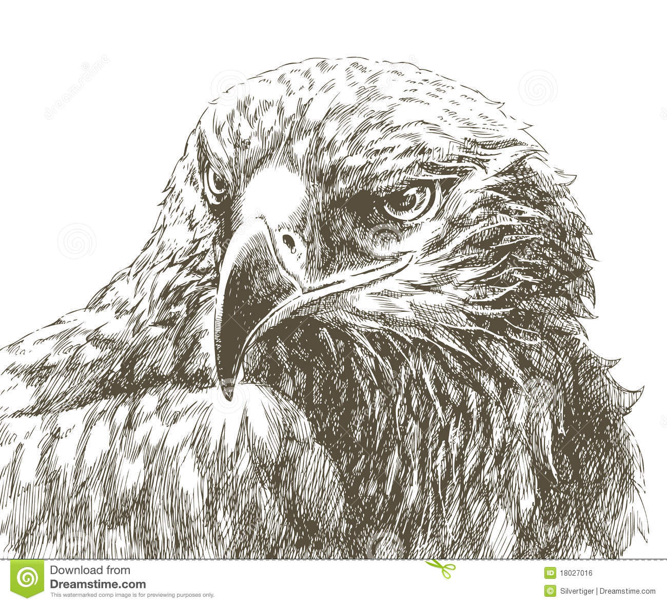 Line Drawing Eagle : Eagle line art stock vector illustration of abstract